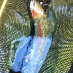 the-greene-outdoors-trout-2